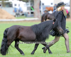 "Patricia Watts exhibited ""Barwon View Maree"" in the Shetland Pony MAre over 9.2hh and N/E 10hh 4 years and over"