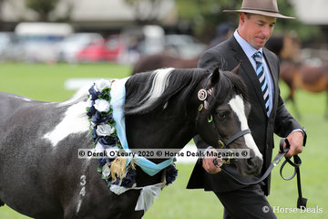 "Supreme Champion Australian Pony ""Earsley Park Keepsake"" in the APSB ring"