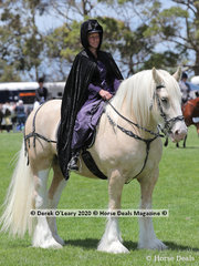 """""""Surrey Springs Anrothan"""" a Gypsy Cob, exhibited by Rebecca McLennan in the Rare Breeds Ring"""