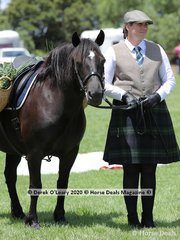 """""""Croftnot Rosemary"""", a Highland, exhibited by Kirstie Law in the Rare Breeds ring, in costume as a market pony"""