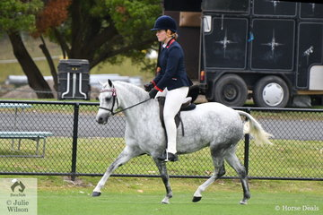 A busy Grace Perkins rode the Blackwood Ponies', 'Blackwood Lavender Blue' to win the class for Five Year Old Small Pony and go on to claim the award for Best Ridden Five Year Old.