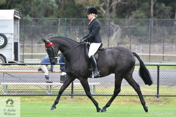 Melanie Burns rode the PBM Show Team's, 'KT Song 'n' Dance' to win the class for Open Hack 15-15.2hh. They went on to be declared Ring 1 Champion Hack.