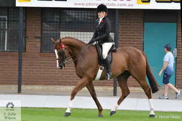 Shae Latimer rode Shae Hanger's former ride, 'Chosen One' to win the class for Open Hack 16-16.2hh.