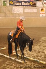 RDB Indigenous Doc ridden by S Oliver in the Amateur Trail.