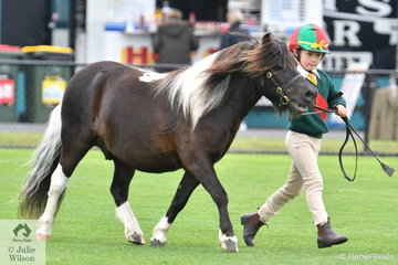 Five year old Milla Loughnan led her, 'Jake' to third place in the class for Best Handler Seven Years and Under.