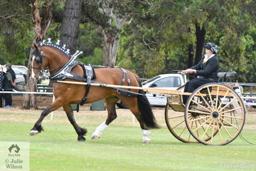 Claire Harris drove the Murroka Clydesdales', 'Murroka Miriam II' to claim the Delivery Horse Championship. The harness classes were well attended and had a magnificent oval all to themselves.