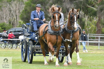 Matthew Marriott was in charge of the most impressive exhibit at the 2020 Bass Coast -Wonthaggi Show. Matthew drove the Ross Carberry bred, 'Carberry Estate Romeo' and 'Carberry Estate Bruno' to win the Pair or Multiple Harness class. The two impressive horses are Belgian Draft, Dutch Gelderlander crosses.