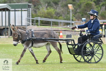 The donkeys had their classes too. Anne Bennett drove her, 'Springully Smokey' to win the class for Donkey Turnout.