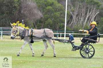 Jennifer McNab drove her, 'Heatherbrae Jackston' to take second place in the class for Novice Driven Donkey.