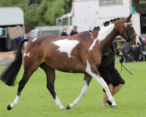 """""""Vancouver Park Just Watching"""" exhibited by Claire Wells in the Pinto ring"""