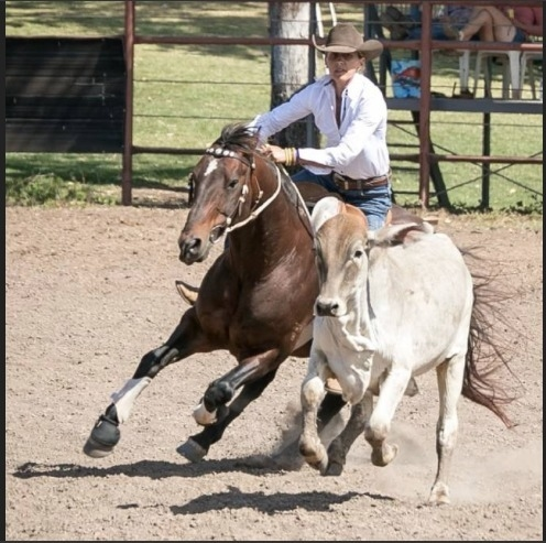 Northern Territory Western Australia Zone: Novice Horse Teles One Moore owned and ridden Cristina Jones. Picture: Helen Groves