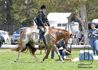 Anne Marshall on Shameelicious in the open Hunter Under Saddle