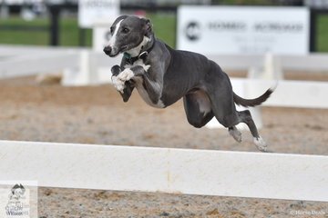 Youth Dressage Championship event director, Jan Smith's, Dee Dee won her fourth annual dog race championship.
