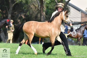 Sheryle Smith's, 'Dreikronen Clover' won the class for WMP Yearling Filly and went on to be declared Reserve Champion WMP Filly at the 2020  WP&CS Gippsland and Regional Promotional Group Youngstock and Performance Show.