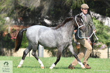 Luke Dawes took second place in the class for Yearling WMP Filly with his, 'Pant-Y Ffynon Coco Chanel'.