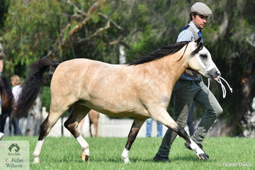 Ash Porter claimed the WMP Filly Championship with his well performed Two Year Old, 'Vanoca Park Peek a Boo Book'.
