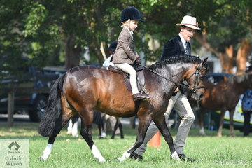 Five year old Ruby Eurell with some help from dad, Tim Eurell  rode 'Dalgangle  Piccadilly' to win the Leading Rein class and claim the Leading Rein/First Ridden Championship. Ruby is the granddaughter of former showjumping and current Thoroughbred training Champion, Greg Eurell.