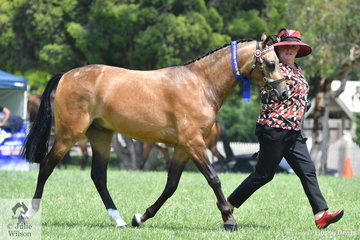 Sharyn Stallard is pictured with her Two Year Old Part Welsh Gelding and Champion Part Welsh Gelding, 'Karlana Take A Bow'.
