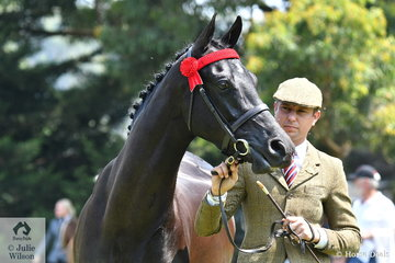 Rhys Lawson is pictured with the Reserve Champion Part Welsh Gelding, the three year old, 'Wynara Signature'.