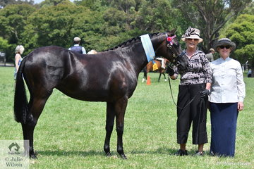 Successful breeder, Melanie McGuire is pictured with her, 'Ascot Party Princess' (Ascot Classic Silk/Burren-Dah Party Girl) that was declared Supreme Champion Led Part Welsh. They are pictured with judge, Sabina Helmgens from NSW.
