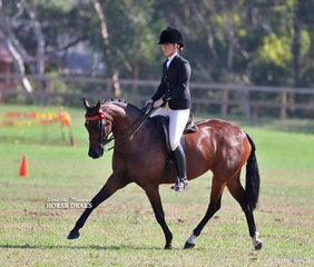 """Ashley Gray rode """"Allambie Park Finesse"""" to win the Open Lightweight Small Galloway class."""