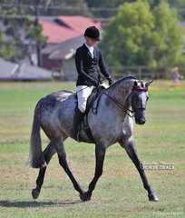 """Melissa Oven's """"Laser Envy"""" won the Open Hack over 16.2hh class."""