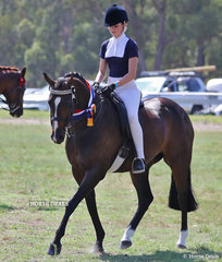 """Champion Small Show Horse """"Mains Picture Picure Perfect"""", exhibited by Georgie Batten."""