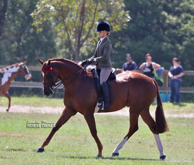 """Champion Large Show Horse """"Seventy Seven"""", exhibited by the Crawford Twins."""