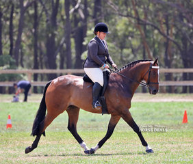 """Reserve Champion Small Show Hunter Horse & Champion Ridden Track To Hack Feature Ridden Show Hunter """"Recifie Beach"""", exhibited by Mollywood Park."""