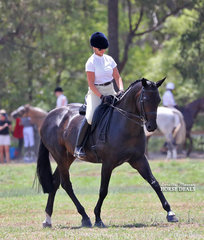"""Champion Small Show Hunter exhibit """"Fidarzi"""", owned and ridden by Gayna Harvey."""