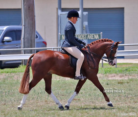 """Reserve Champion Large Show Hunter Pony """"Koora-Lyn Red Rock"""", exhibited by Barnes & Hardes."""
