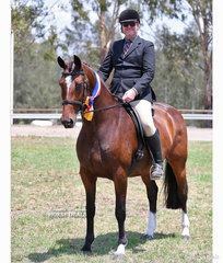 "Champion Large Show Hunter Horse ""Jiselle R"" and Daniel Garland."