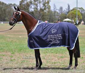 """Winner of the Track To Hack Feature class - Led Large Show Horse """"Hand From Above"""", exhibited by Tina Williams."""