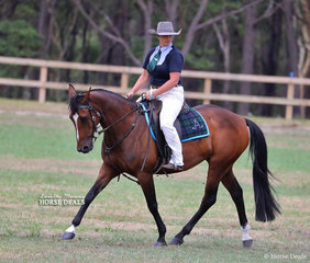 """Alex Pope and """"Ballengarra Trinket"""" placed 2nd in both the Novice Working ASH and Open Working Mare ASH, they then won the Second Chance Working ASH class."""