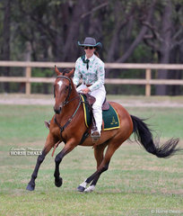 """Georgia Neilson riding """"Tocal Fontain"""" won the ASH Working Mare class."""