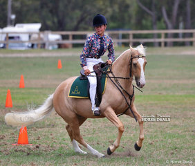 """Winner of the ASH Working Gelding class """"Myee Champagne"""", exhibited by Holly Burgess. They went on to win Reserve Champion Working ASH."""