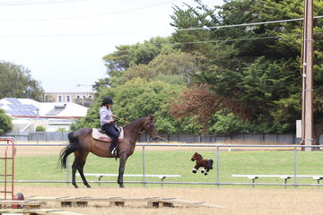 Emma Sagasser and Chester eyeballing the pony on a rope.