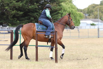 Angela Lyons riding Airlee Stan in the Novice section.