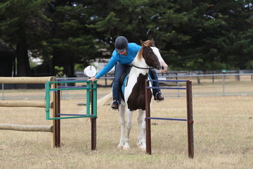 Nakita Lin, tackling the gate on her young horse first outing.