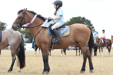 Local pony club rider  having a go in the Wipper Snappers section.