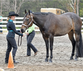 Allie Morgan showing Im Good N Lazy in the Junior Youth showmanship 5-13 years