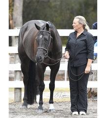 CVS The Reverent shown by  Mandy Jones, in the Junior Horse Hunter in Hand.
