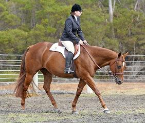 Jackie Becker and Red Hot Rhythm warming up for Senior Horse Hunter Under Saddle