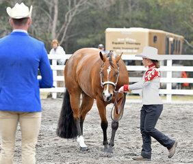 Kady Morgan showing Cowboy Code in Junior Youth Showmanship 5-13 years.