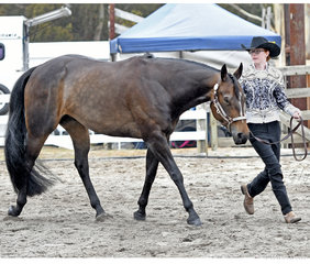Milla Hunt showing I'm Good N  Lazy, in the Youth 14-18 years Shwomanship