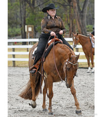 Springvale Gold N Rule, ridden by Georgia Weavell in the Amateur Western Horsemanship