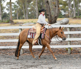Stop N Play, ridden by Jane Stone, in the Amateur Ranch Riding.