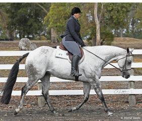Teresa Robinson riding Chocolate Cruiser in the Senior Horse Hunter Under Saddle.