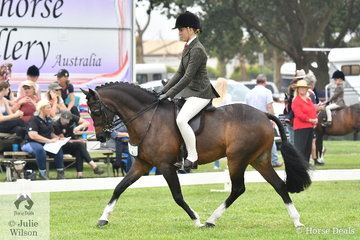 Ava Halloran had a busy and successful day and is pictured aboard Taylah Arnott's, 'Fontain Park Sir Harvey' that took the Child's Large Show Hunter Pony Reserve Championship.