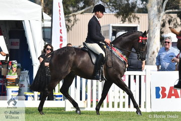A busy Greg Mickan rode Sue Thompson's beautiful, 'Givenchy' to take out the 2020 Barastoc Newcomer Small Hack Championship.